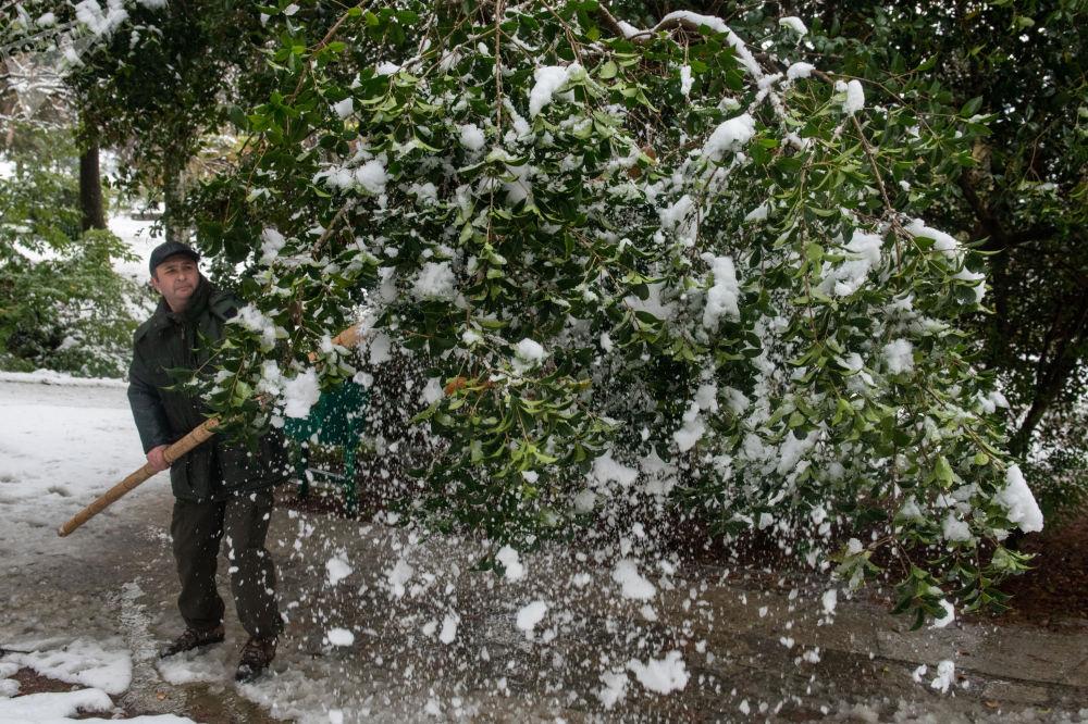 """索契市""""坚德拉里伊""""公园组织职工清扫植被积雪。"""