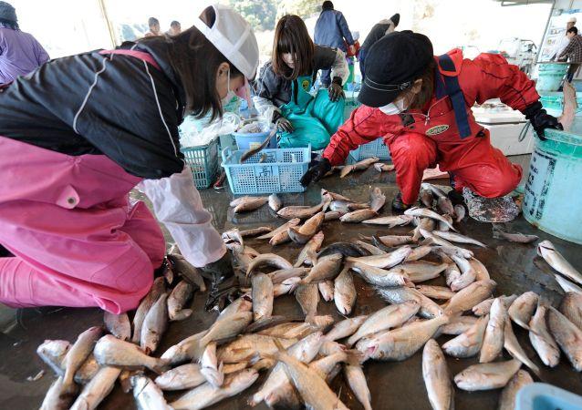 日本福岛水域捕捞出来的鱼中再度发现放射性元素铯