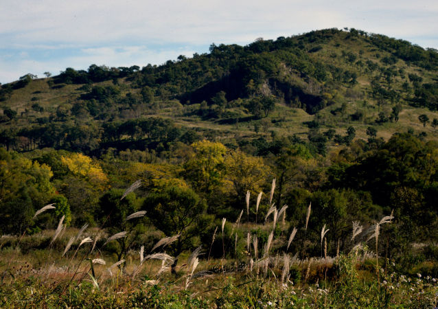 俄自然资源部长表示俄罗斯不会出现私人森林
