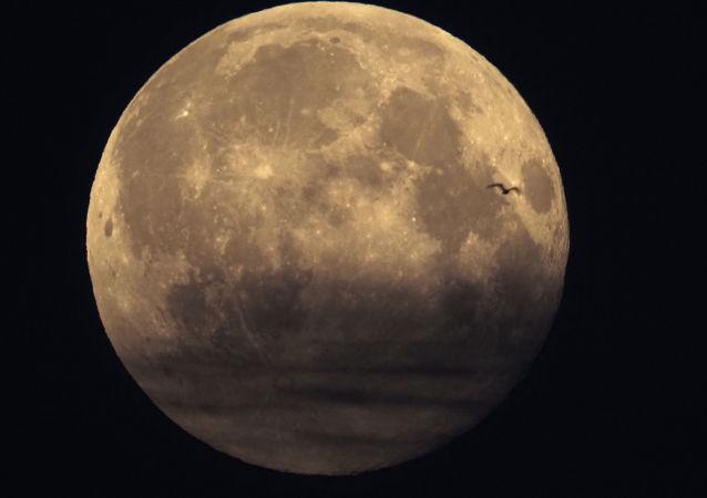 俄国家航天集团总裁顾问:俄罗斯无法独自将宇航员送往月球
