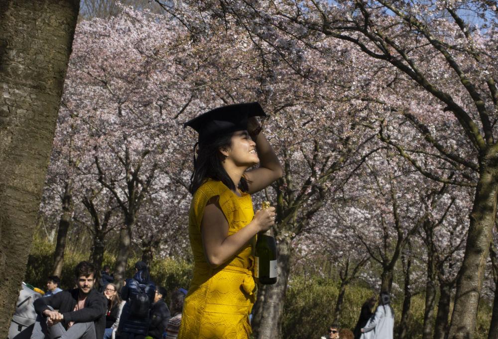 阿姆斯特丹,樱花树下拍照的女孩。