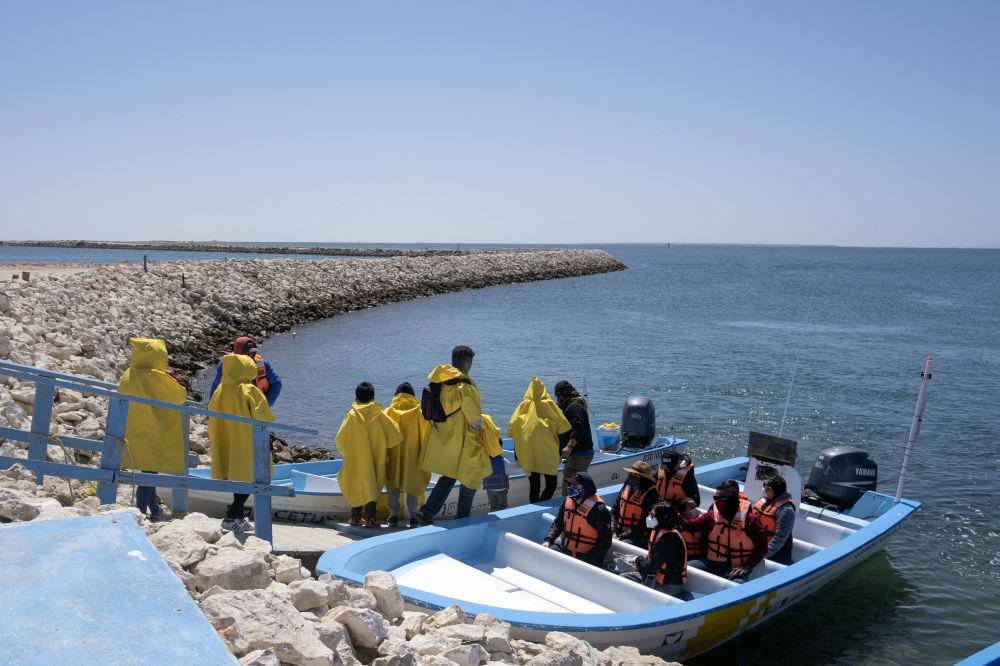 墨西哥,游客们乘船探寻鲸鱼。