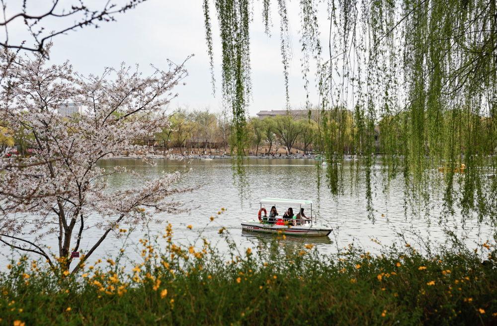 北京玉渊潭公园春季赏花季期间,游客在园内划船。