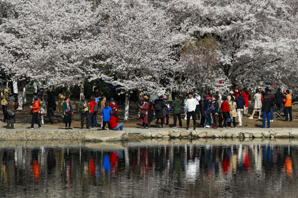 游客在北京玉渊潭公园里赏花。