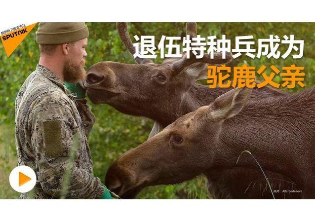 驼鹿父亲:退伍特种兵开办保护动物园