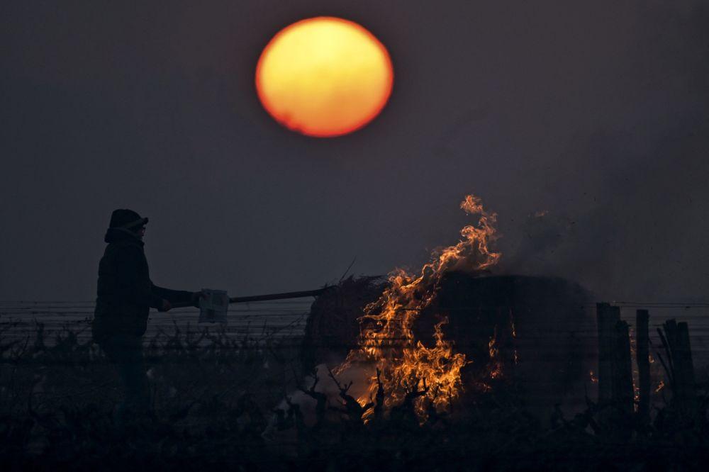 法国果农在葡萄园中燃烧稻草,为葡萄加温除霜。