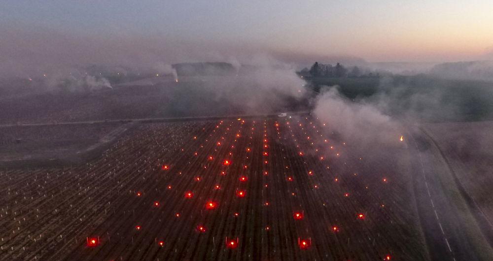 法国各葡萄园中弥漫着稻草燃烧的浓烟。