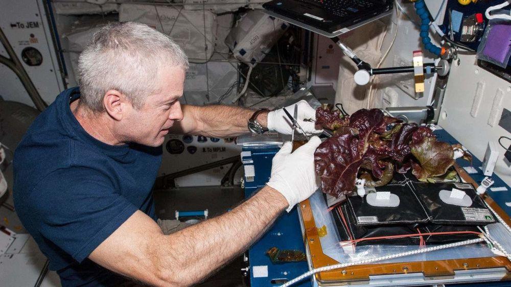 美国航天员斯蒂文在国际空间站采收养殖蔬菜。