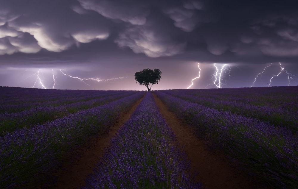 西班牙摄影师胡安•洛佩斯•路易斯拍摄的作品《Electric Storm on Lavender》,获得公开组景观类别奖项。