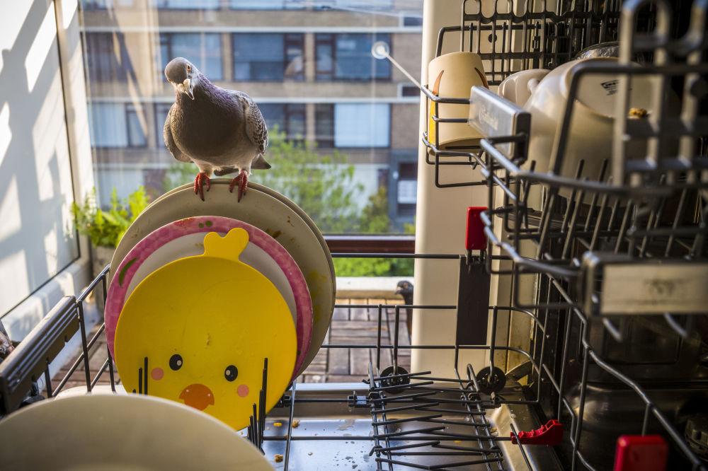 荷兰摄影师贾斯珀•多斯特拍摄的《疫情中的鸽子:一个爱情故事》系列作品,获得自然类第一名。