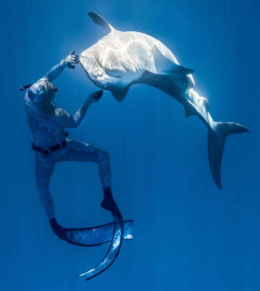 法国自由潜水员皮耶里克在水下与野生鲨鱼互动。
