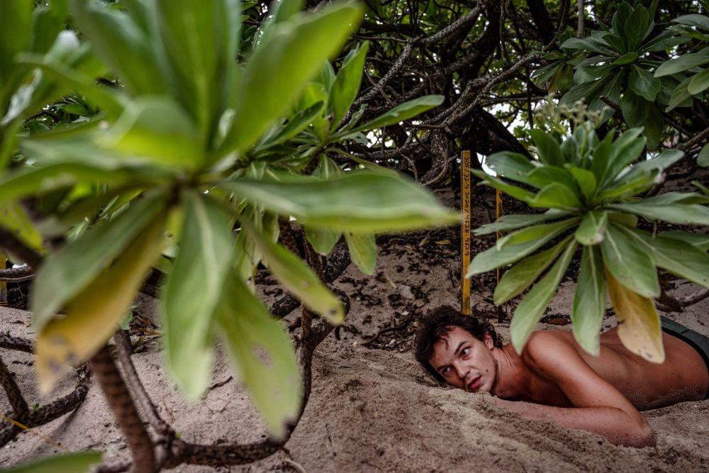 法国志愿者在马拉西亚海滩清理海龟蛋。