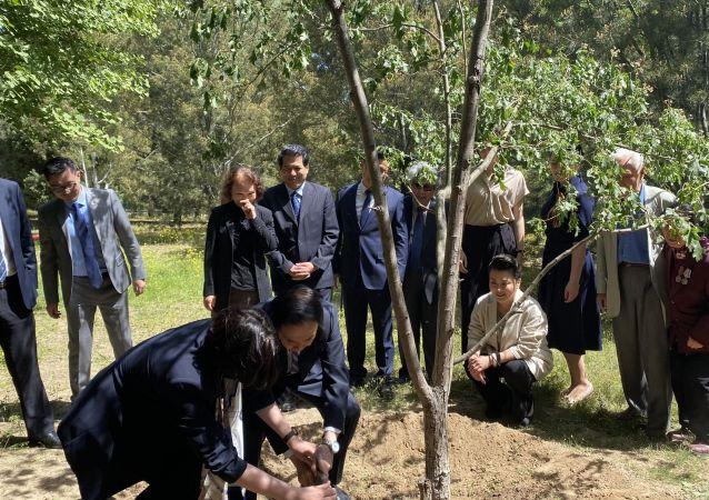 俄中友谊纪念树种植活动在北京举行