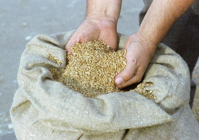 叙利亚从俄方收到8.1万吨小麦的人道主义援助