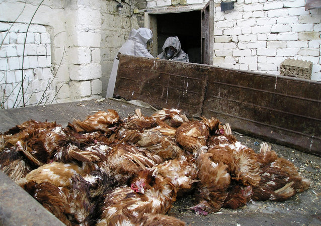 因H7N9流感威胁 香港扑杀批发市场所有家禽