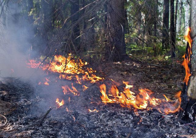 俄紧急情况部准备帮助希腊扑灭森林大火