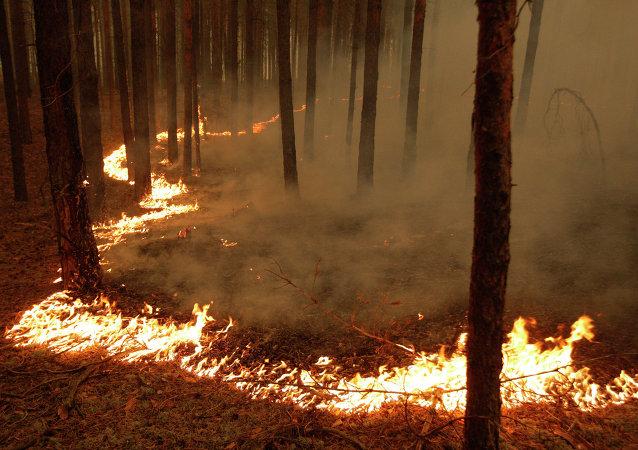 俄滨海边疆区仍有两处森林火情