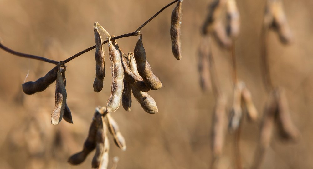 中国中粮集团计划从俄阿穆尔州对华出口大豆