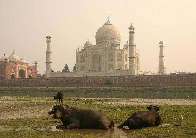 泰姬陵,阿格拉,印度