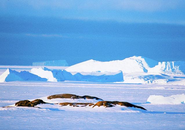 专家:美及其他国家在南极秘密进行军事试验