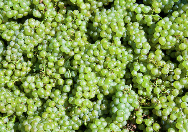 中国科学家为获佳酿将葡萄送往太空