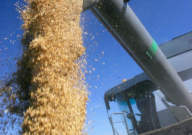 今年1-8月满洲里口岸进口俄罗斯粮食5.4万吨