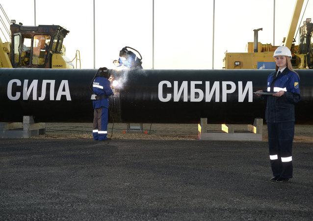 """俄气拟于年内将""""西伯利亚力量""""管道铺设至俄中边界"""