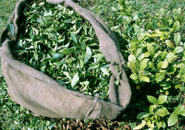 俄罗斯取消对斯里兰卡茶叶进口限制