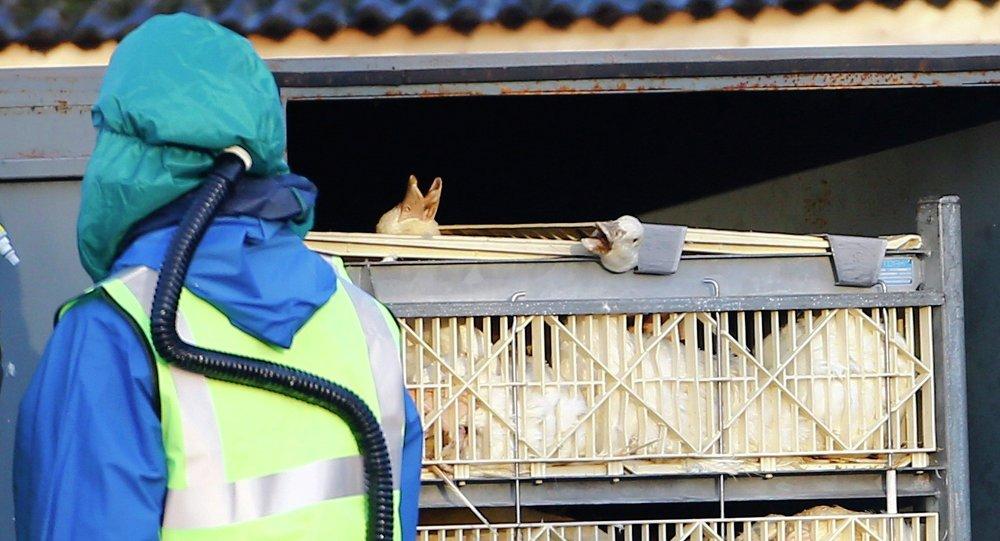 韩国禁止从瑞典进口家禽