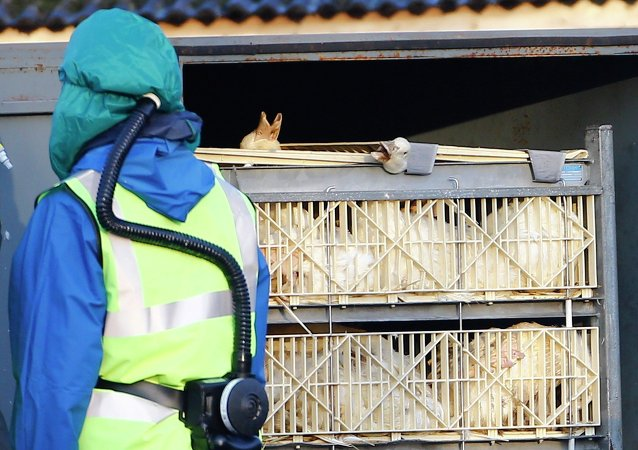 美国一家最大火鸡饲养场发现禽流感病毒