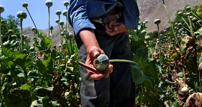 吉爾吉斯斯坦情報部門查扣一批發往獨聯體國家的阿富汗毒品