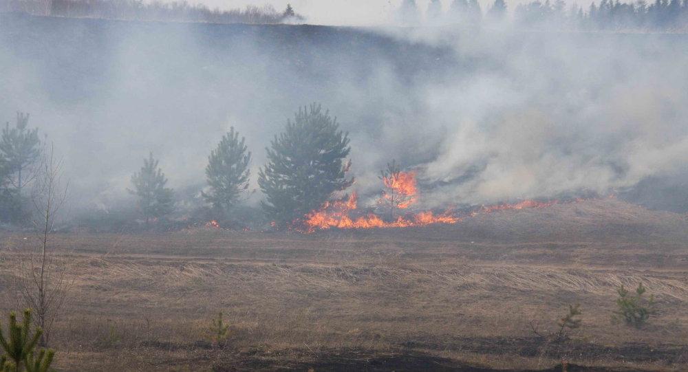 俄伊尔库茨克州8起森林火灾已被扑灭 - 俄罗斯卫星