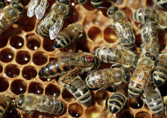 媒体:俄罗斯蜂蜜将不得有抗生素残留