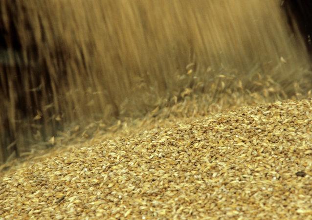 俄动植物卫生监督局:越南将俄纳入谷物长期出口国名单