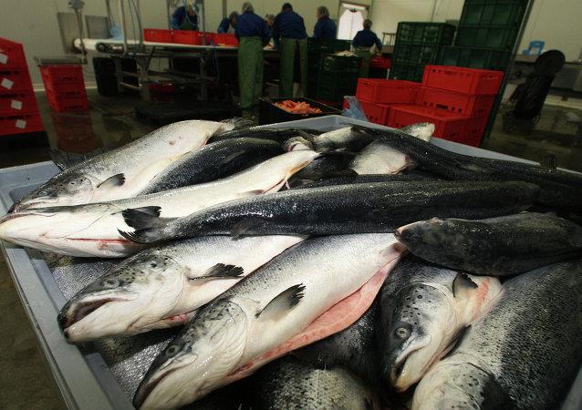 俄滨海边疆区渔业协会会长:俄中渔业合作前景广阔