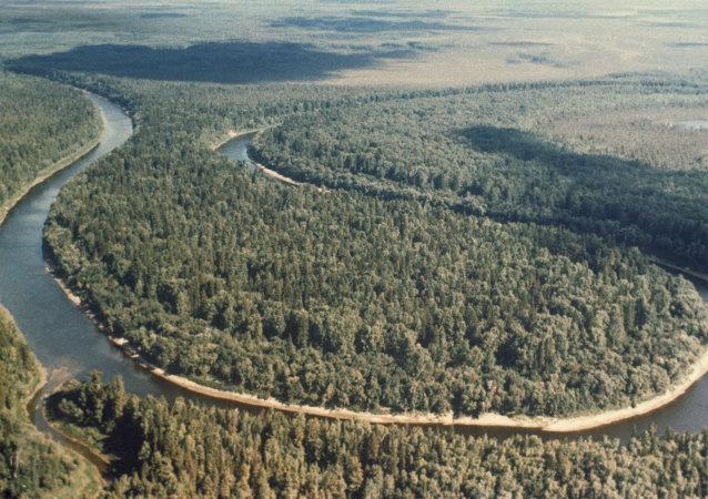 森林论坛讨论未来十五年全球可持续森林政策