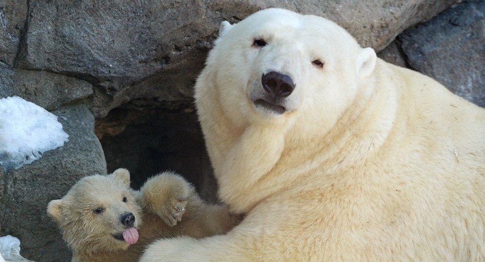 莫斯科动物园,北极熊如果牙签蜗牛图片