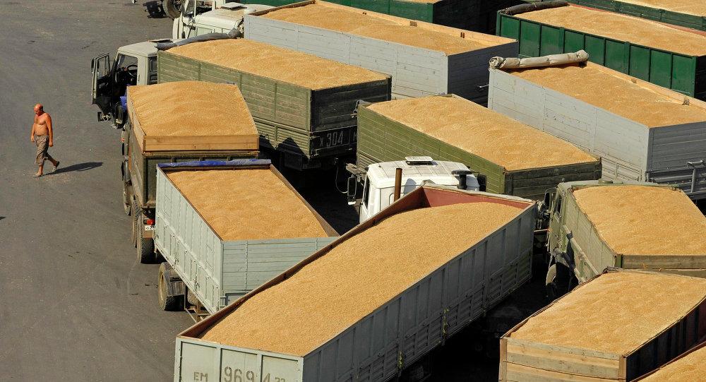 俄農業部:俄本農業年度穀物出口量或將為3000萬噸