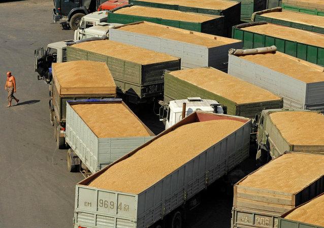 俄罗斯小麦出口