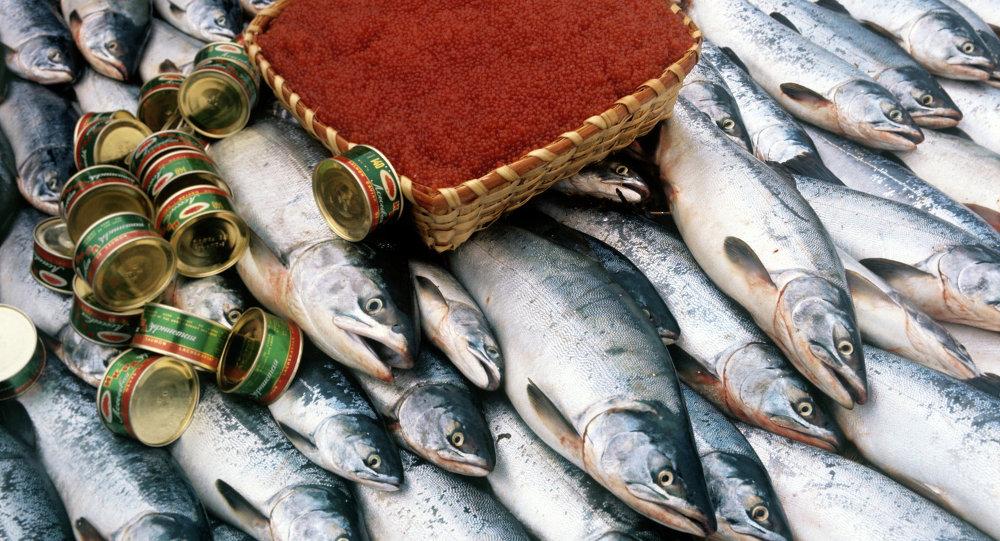 日本将大量减少俄专属经济区鲑鱼捕捞量