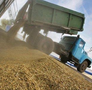 美国在粮食市场受到俄罗斯的排挤
