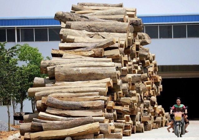 中国成俄伊尔库茨克州木材最大买家