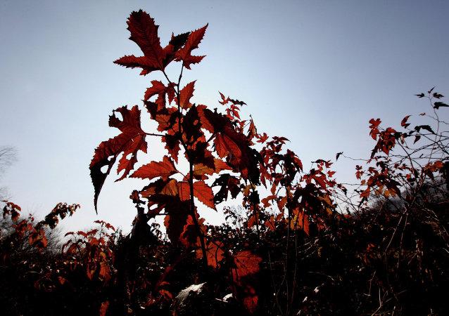 """""""豹之乡""""国家公园与中国交界处发现数十种濒危植物"""