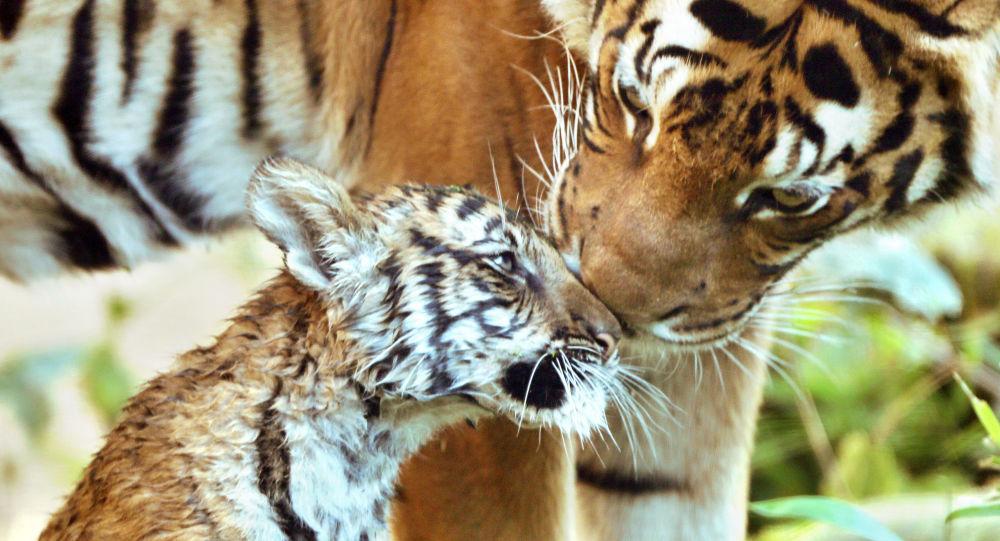 保护的动物发行的系