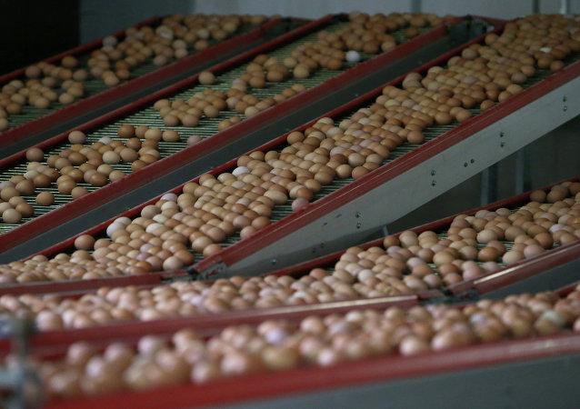 安哥拉当局销毁了1100万只非法进口鸡蛋