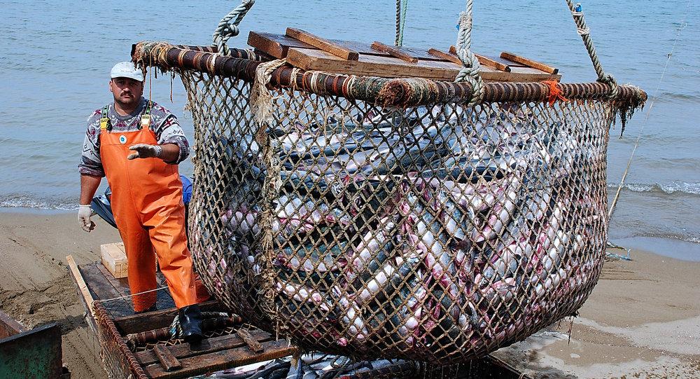 专家:中国在渔业领域可与北极国家开展合作