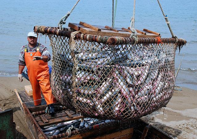 中国农业部:中方愿与俄方继续强化边境水域渔业渔政合作