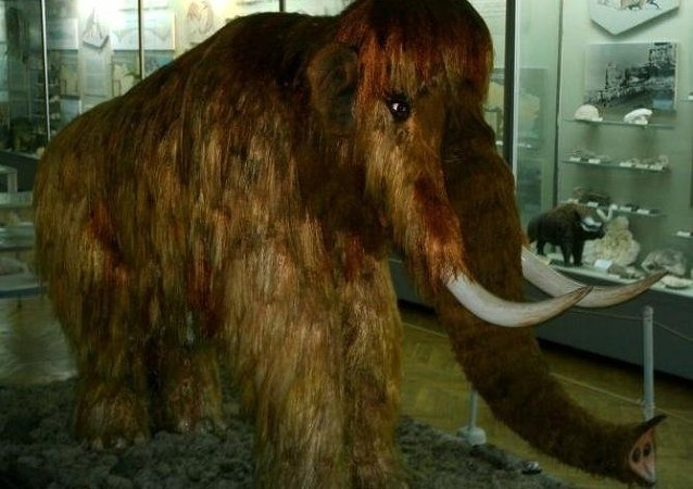 媒体:学者声明长毛猛犸象将回归