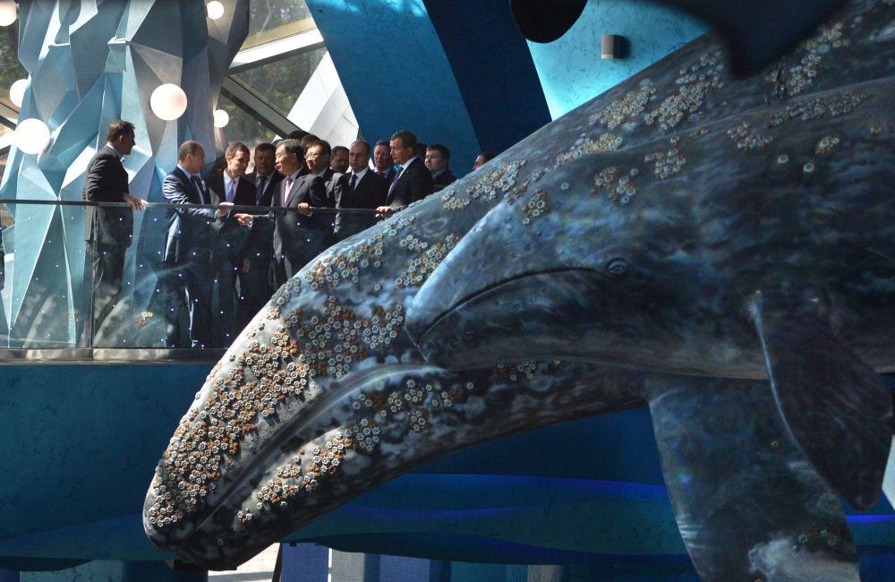 普京参观俄罗斯岛海洋馆