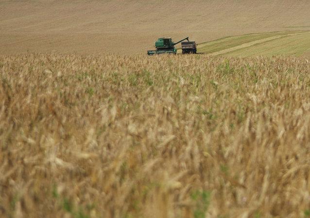 首批俄新西伯利亚的小麦将于10月出口中国